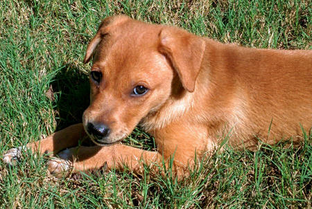 Maui the Mixed Breed Pictures 1045359