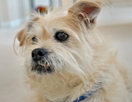 Max the Terrier Mix Pictures 712133