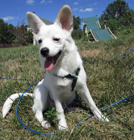 Maya the Mixed Breed Pictures 1059256