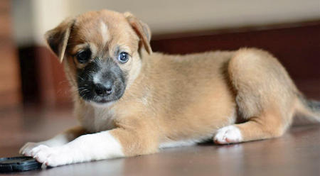 Meea the Mixed Breed Pictures 1047223