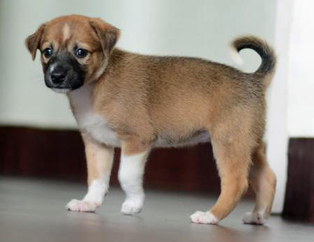 Meea the Mixed Breed Pictures 1047225
