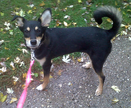 Melody the Border Collie Mix Pictures 996678