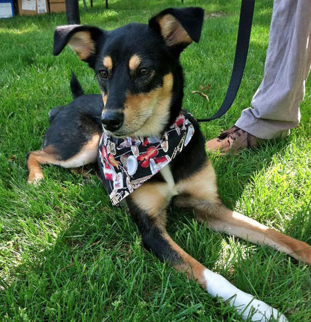 Melody the Border Collie Mix Pictures 996679
