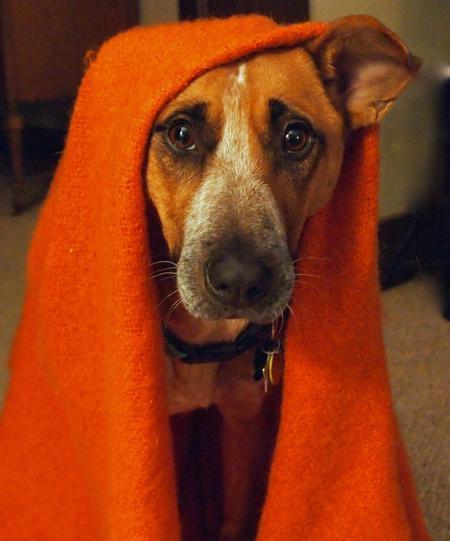 Mhari the Australian Cattle Dog Mix Pictures 844637