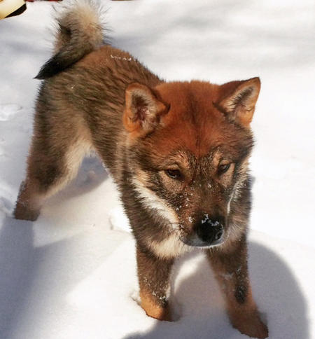 Mika the Shikoku Pictures 1036044