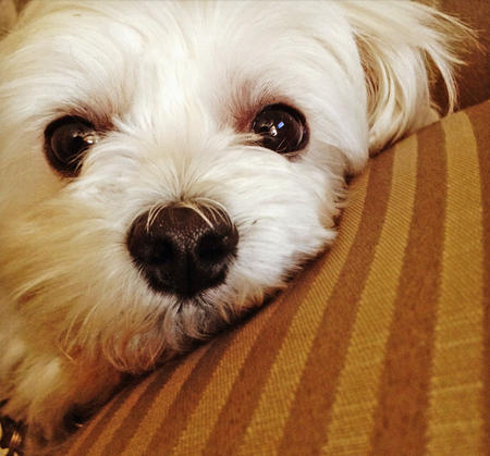 Mikey the Maltese Pictures 971880