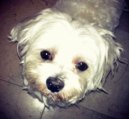 Mikey the Maltese Pictures 971881