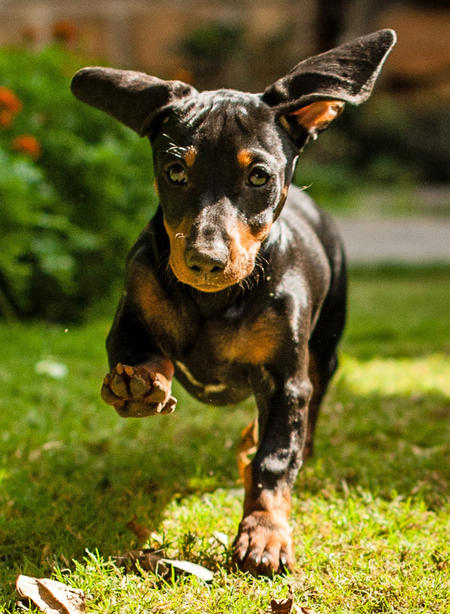 Minnie the Dachshund Pictures 963305