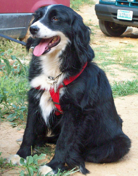Missy the Border Collie Mix Pictures 827023