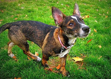 Mitzi the Mixed Breed Pictures 857914