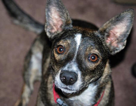 Mitzi the Mixed Breed Pictures 857916