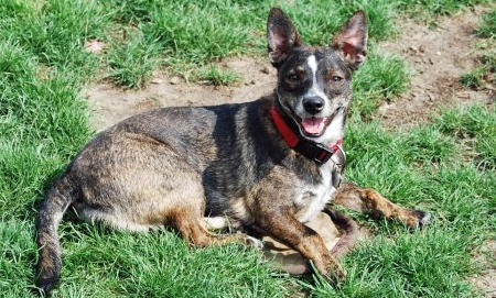 Mitzi the Mixed Breed Pictures 857917