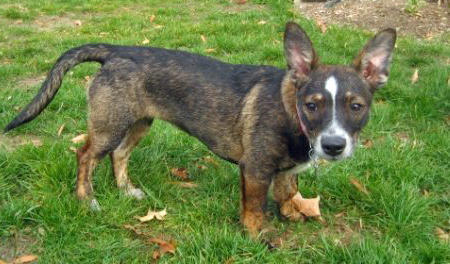 Mitzi the Mixed Breed Pictures 857913