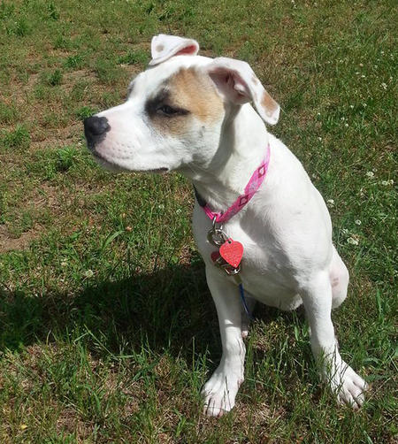 Nami the American Bulldog Mix Pictures 1057563