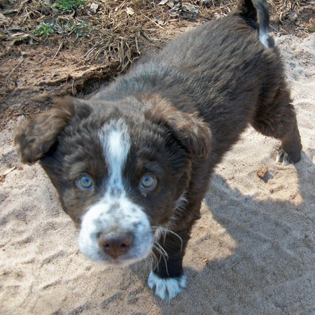 Nate the Border Collie Mix Pictures 767082
