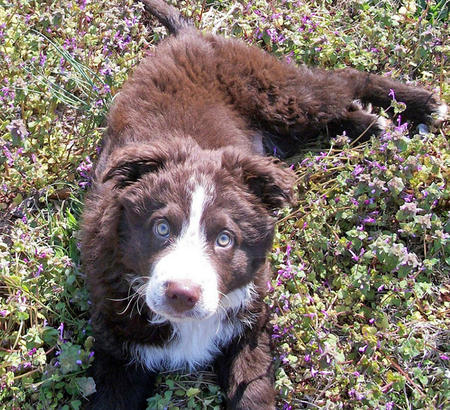 Nate the Border Collie Mix Pictures 767083