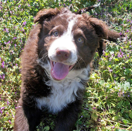 Nate the Border Collie Mix Pictures 767085