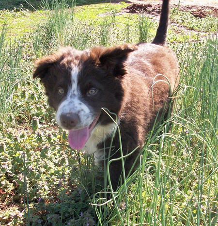 Nate the Border Collie Mix Pictures 767086