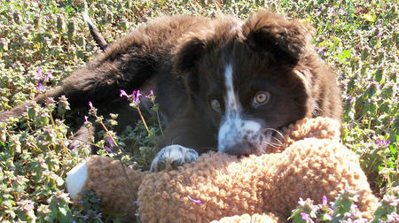 Nate the Border Collie Mix Pictures 767087