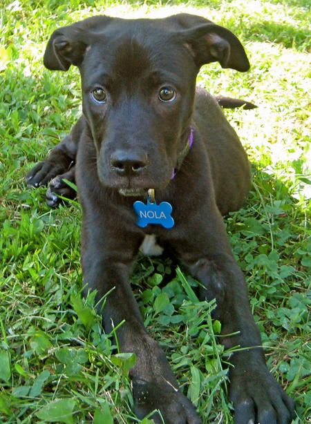 Nola the Mixed Breed Pictures 614459