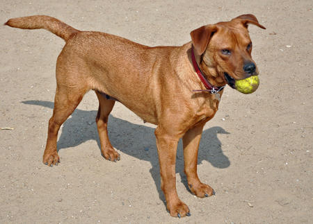 Nutmeg the Mixed Breed Pictures 564401