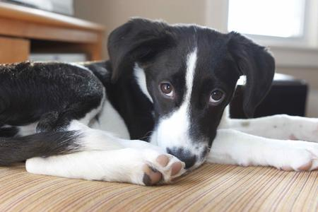 Ollie the Border Collie Mix Pictures 868490