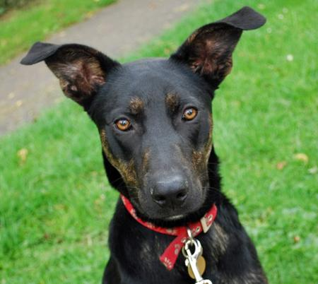 Onion the Mixed Breed Pictures 1047106