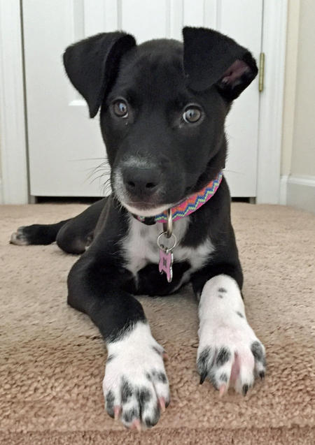Phoebe the Catahoula Mix Pictures 1047396