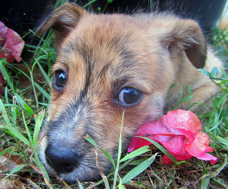 Pingu the Terrier Mix Pictures 760445