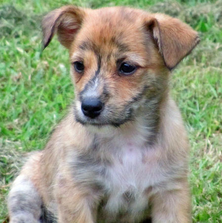 Pingu the Terrier Mix Pictures 760446