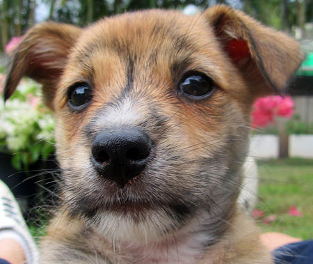 Pingu the Terrier Mix Pictures 760447