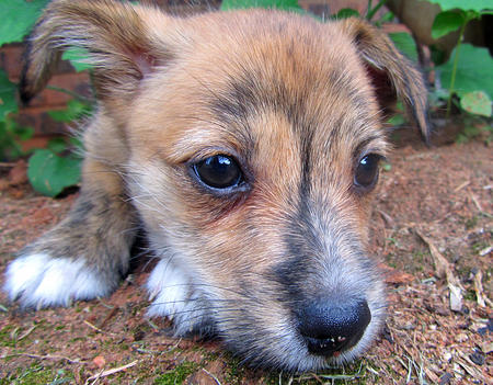 Pingu the Terrier Mix Pictures 760448
