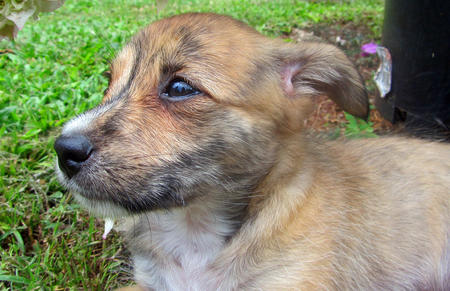 Pingu the Terrier Mix Pictures 760451