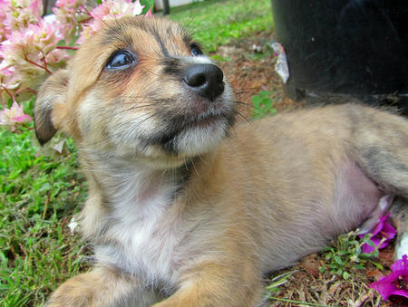 Pingu the Terrier Mix Pictures 760444