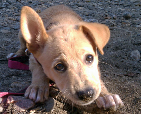 Pippa the Mixed Breed Pictures 829354