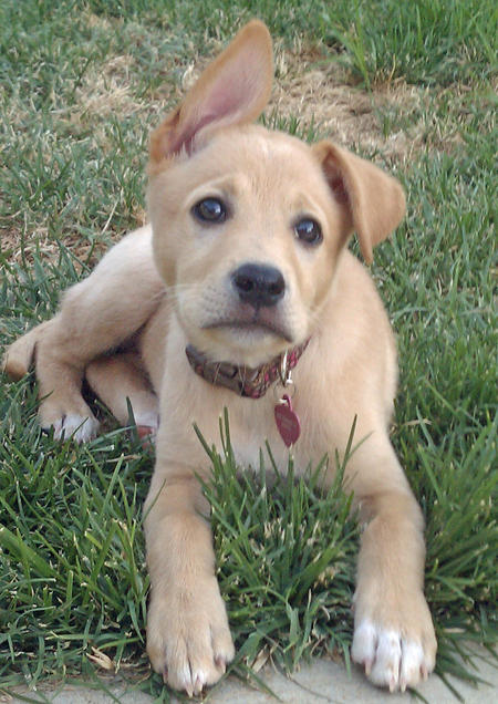 Pippa the Mixed Breed Pictures 829357