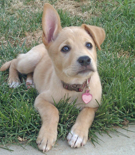 Pippa the Mixed Breed Pictures 829358