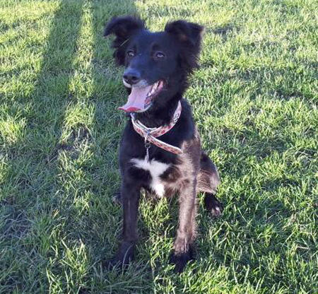 Poppy the Border Collie Mix Pictures 966408