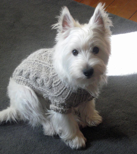 Powder the West Highland Terrier | Dogs | Daily Puppy