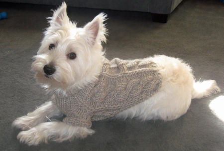 Powder the West Highland Terrier Pictures 590592