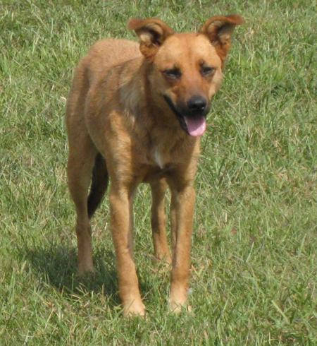 Pumpkin the Shepherd Mix Pictures 497625