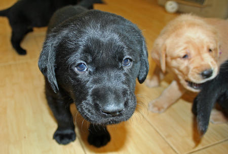 Puppies in Training Pictures 421933