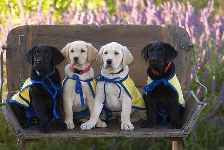Puppies in Training Pictures 421934