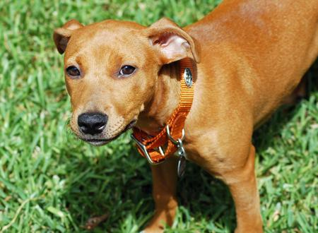 Red the Mixed Breed Pictures 746495
