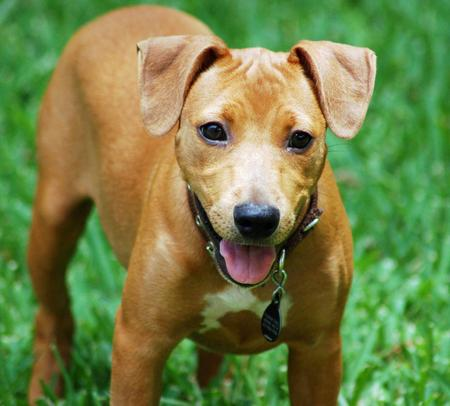 Red the Mixed Breed Pictures 746496