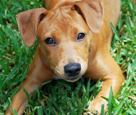 Red the Mixed Breed Pictures 746491