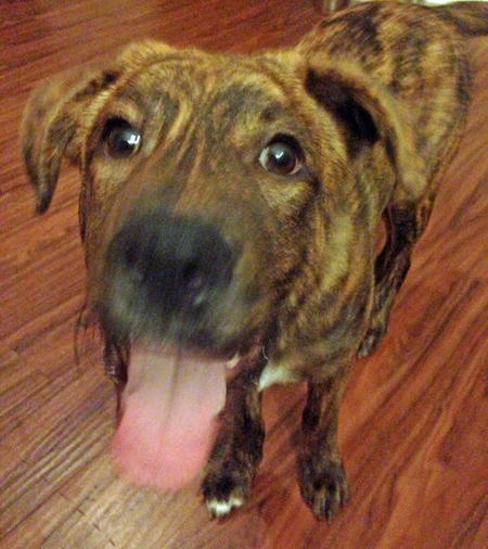 Remington the Mixed Breed Pictures 757667
