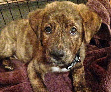 Remington the Mixed Breed Pictures 757668