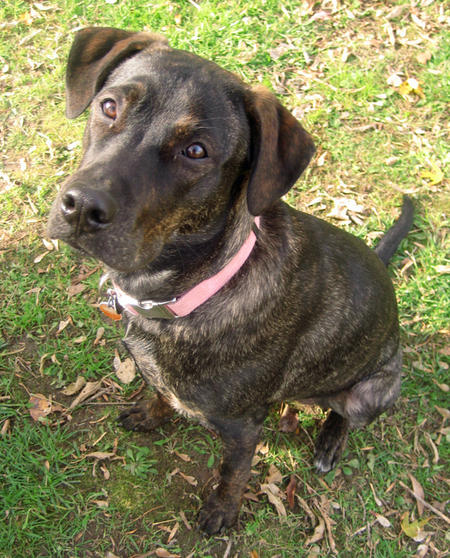 Remington the Mixed Breed Pictures 757669