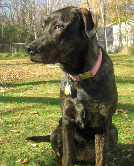 Remington the Mixed Breed Pictures 757671